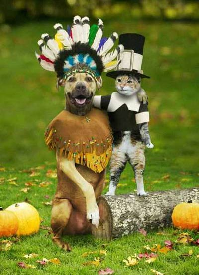 thanksgiving-dog-cat