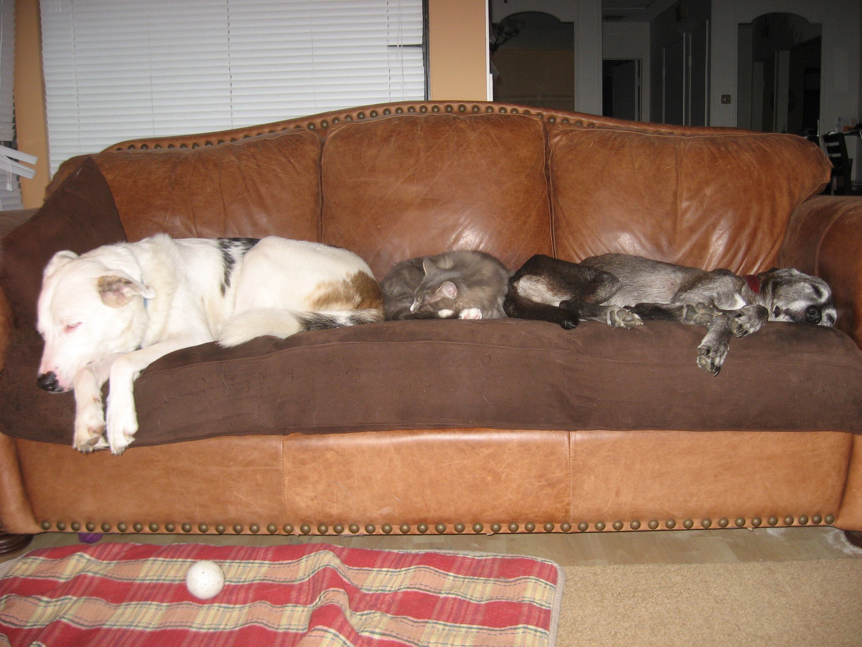 couch-pets