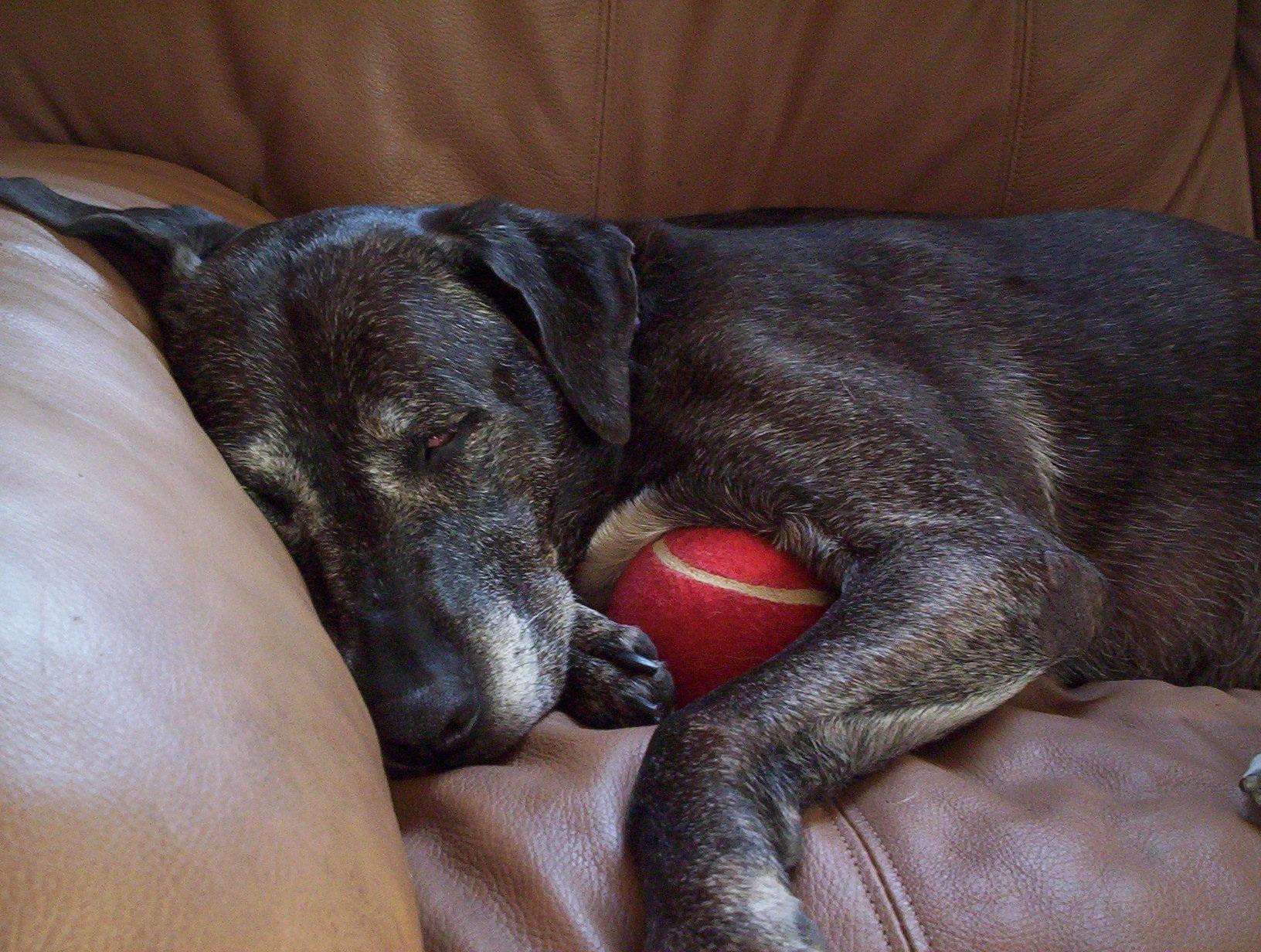 casey-sleeping-ball