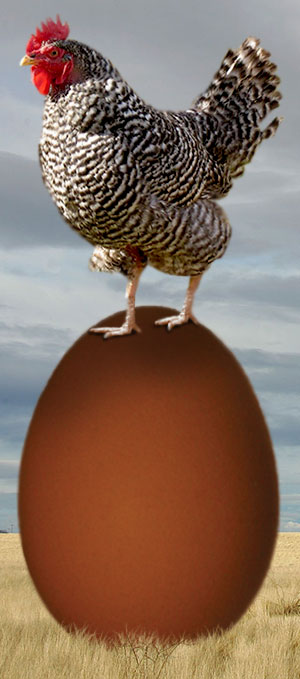 chicken-standing-egg